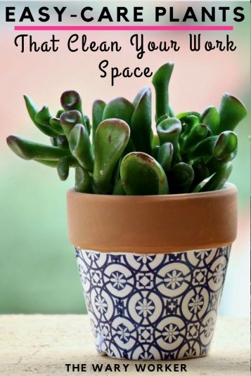 Easy care plants that purify air