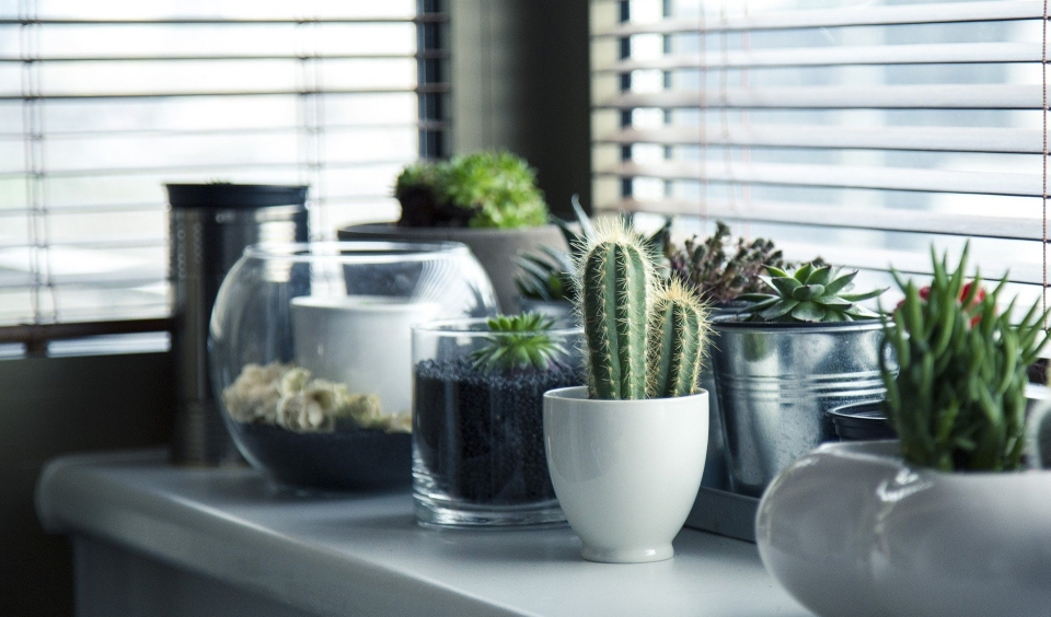 Best Plants To Clean The Air In Your Work Space