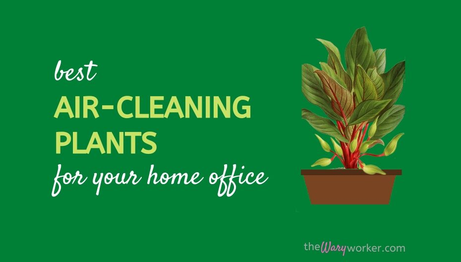 Best Air Cleaning Plants