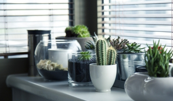 Best plants to clean air in work space
