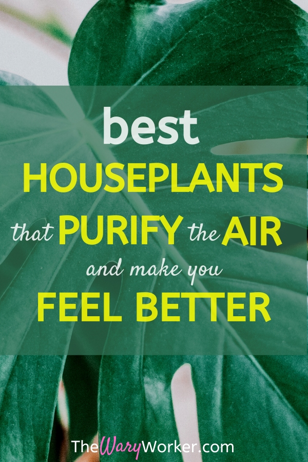 Best air cleaning plants that also make you feel better.